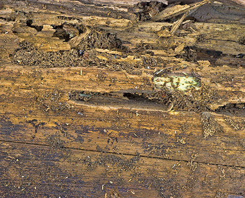 Termite & Wood Destroying Organism Inspections