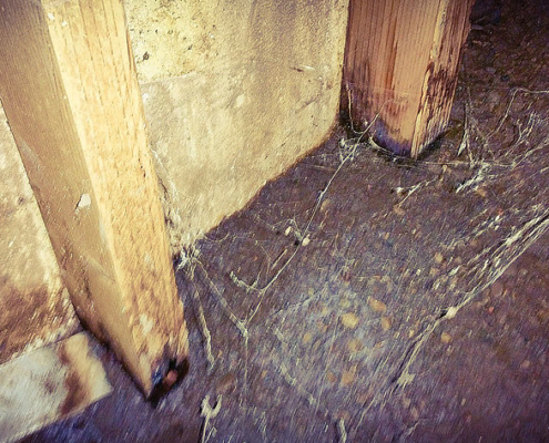 Rotting structural posts. Wood should never be in contact with soil. This was found in a crawlspace, and left unchecked, will cause structural failure in a home.